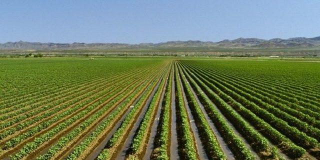 Coronavirus: tutti gli aiuti per aziende agricole e lavoratori